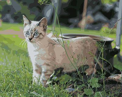 Изображение Кошка на прогулке