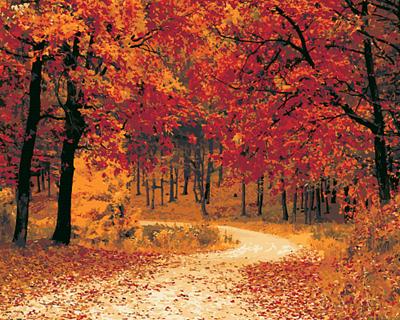 Изображение Осенняя тропа
