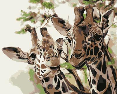Изображение Два жирафа