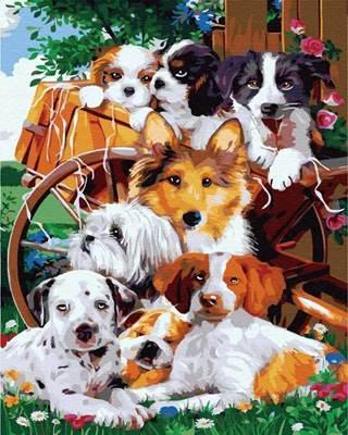 Изображение Друзья собаки