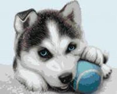 Изображение Хаски с мячиком