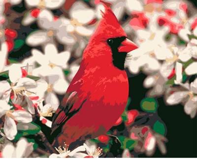 Изображение Кардинал