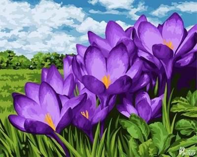 Изображение Фиолетовые подснежники