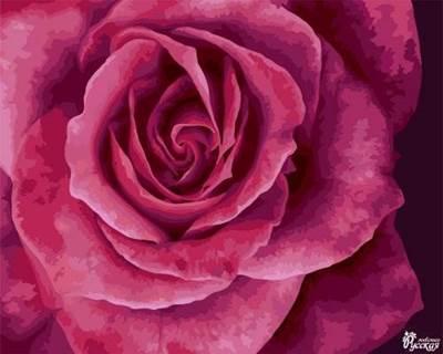 Изображение Прекрасная роза