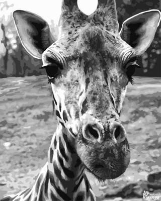 Изображение Любопытный жираф