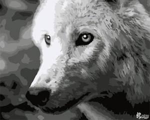 Изображение Белый волк