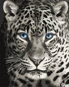 Изображение Голубоглазый леопард