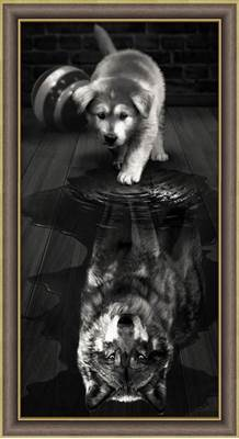 Изображение Волк внутри